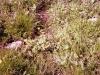 015-1974-15-temmuz-lesin-bernoz-cicekler