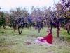 tn_1980-sonbahar-bodrum-gumusluk-milas-2