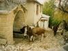 1999-arapgir-pekerler-evi-15